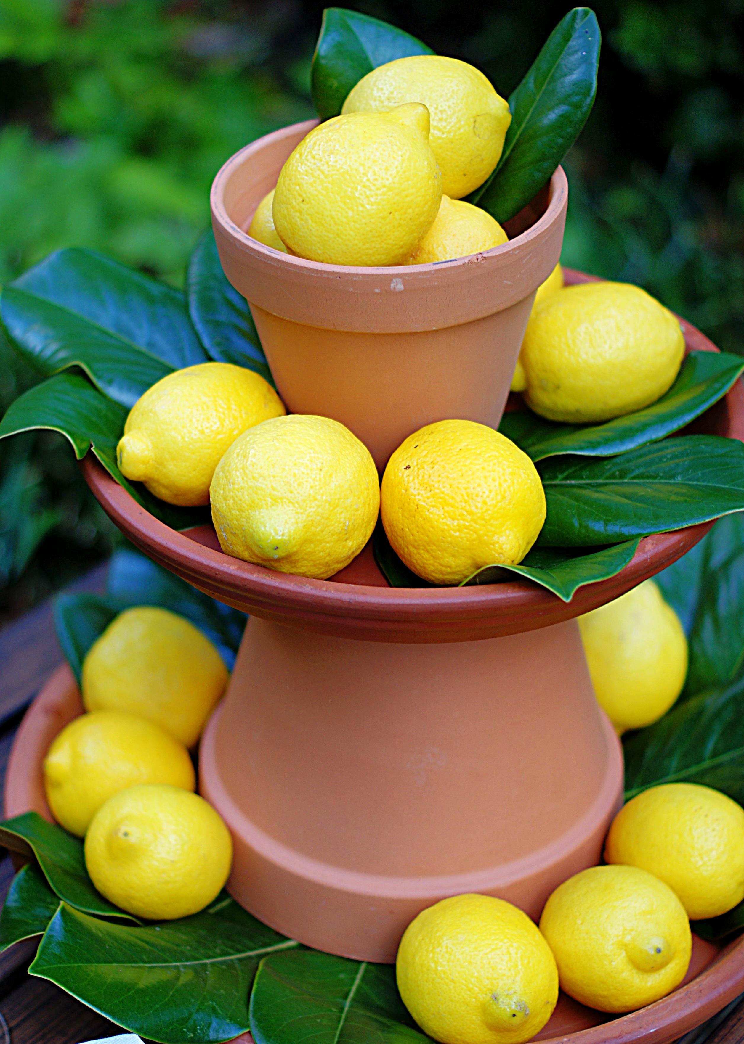 An upclose of the 2 tier lemon centerpiece with terracotta pots and magnolia leaves